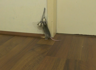 Mouse Rings Bell to Open Door