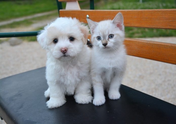 Why Dog Lovers Should Live with Cats