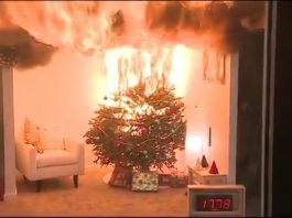 christmas trees dangers safety