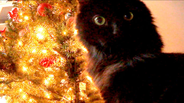 Cats Attacking Christmas Tree